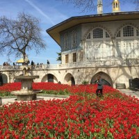 Tulips and Topkai Palace Istanbul